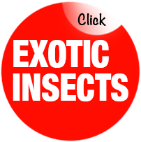 Exotic Insects