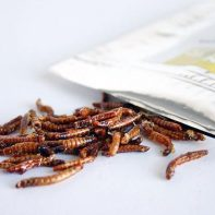 toffee mealworms