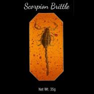 Scorpion Brittle