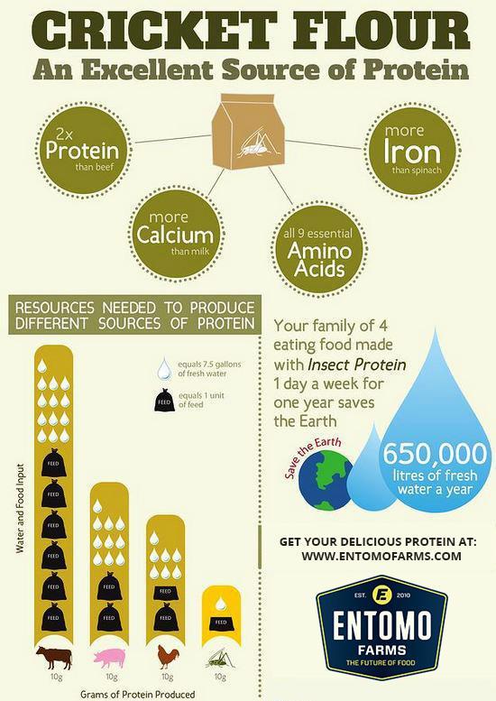 Cricket Flour Protein
