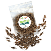 Edible Roasted Crickets