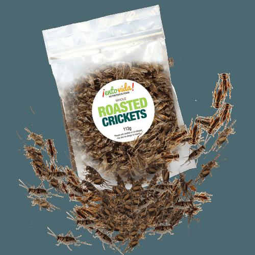 Edible Roasted Crickets