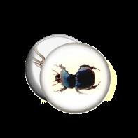 beetle bite