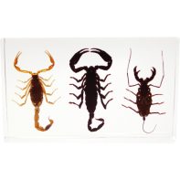 Scorpion Set