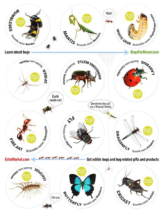 Bug Stickers