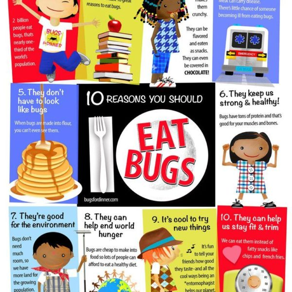 EDIBLE INSECTS EDUCATIONAL POSTER - Edible Insects