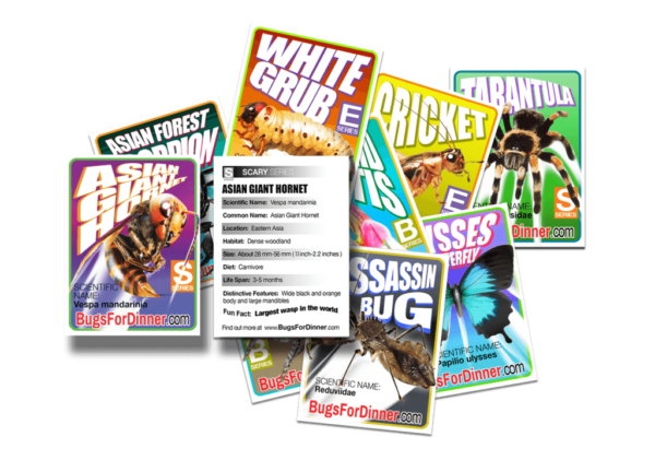 Bug TRading Cards II