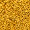 Pollen Closeup