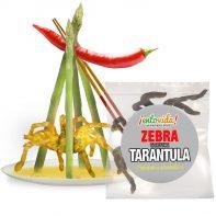 NEW-Zebra-Tarantula-Spider-Edible-Insect
