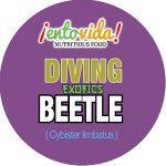entovida_diving-beetle-600