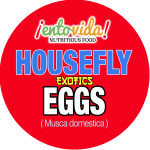 EntoVida_Housefly-Eggs_edible_insects (1)