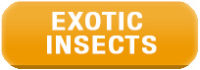Exotic Edible Insects