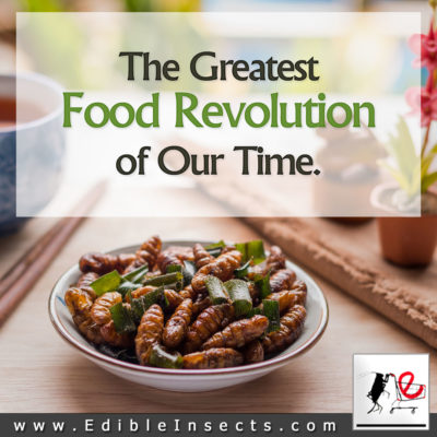 Food Revolution Insects