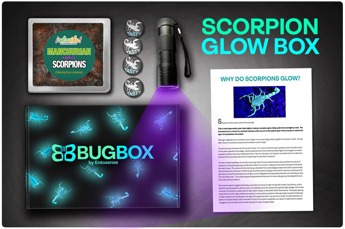 Edible Scorpion Gift Subscription Box