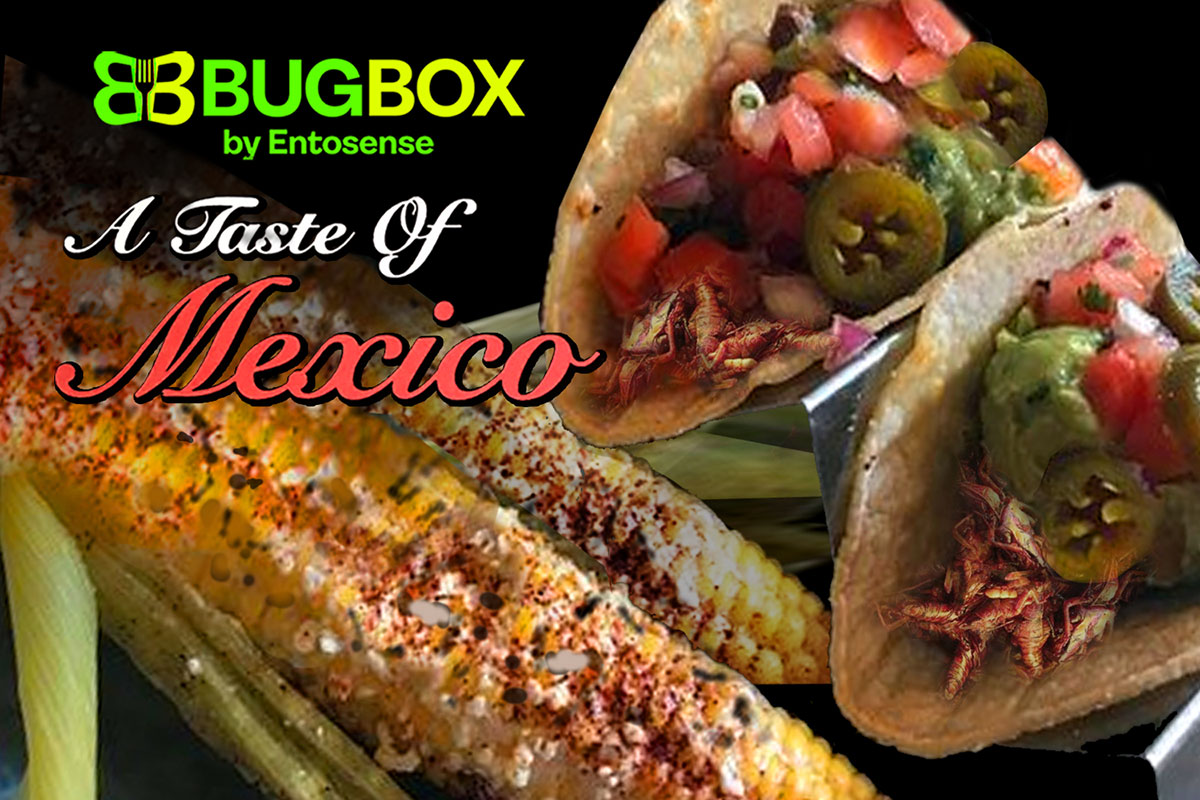 Taste of Mexico Gift Subscription Box