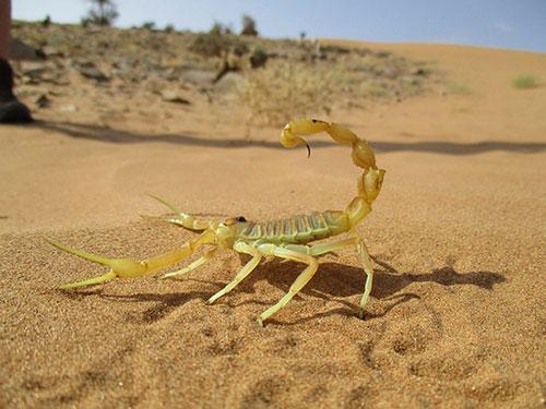 Scorpion Care