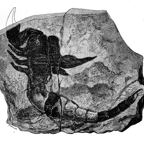 Scorpion fossil Discovery Wisconsin 2020