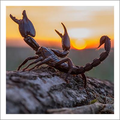 Scorpion Information